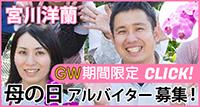 有限会社宮川洋蘭―★母の日ウィーク★期間限定アルバイト募集―