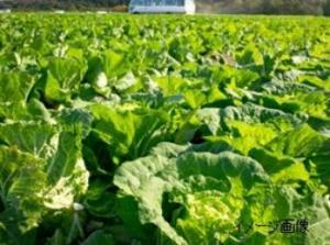 十勝農業協同組合連合会 湧洞牧場