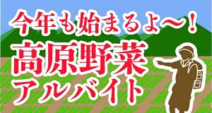 今年も始まります!\高原野菜の短期アルバイト/<群馬・長野>
