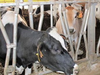 利根川近くの牧場で一緒に日本一の牧場をめざしませんか? ~何年たっても『牛が可愛い』という気持ちは変わらない~ ◎未経験者歓迎◎ 【週休2日制・月給21万円~】