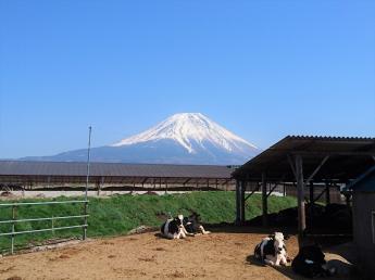 期間限定もOK!独立就農希望者も歓迎★富士山の麓の牧場であなたも牧場生活始めませんか?