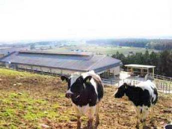 牛たちや自然とふれあえる憩いの場、四日市市ふれあい牧場で働きませんか?【社会保険完備】