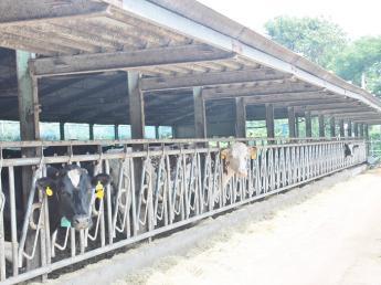 新しく牧場の一員となってくれる方を探しています! ★中途の方、新卒の方ともに歓迎★ \若手活躍中/ 動物が好きな方歓迎!未経験者歓迎!