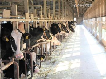 雄大な自然が広がる蒜山高原で酪農始めませんか? 循環酪農でこだわりの牛乳を生産しています!《未経験者歓迎・将来牧場経営したい方歓迎》