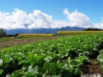 人気の高原野菜!農業に興味のある方の第1歩にオススメな仕事です♪元気でやる気のある方募集中!【期間限定アルバイト】