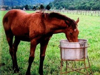 『自分たちの夢を仔馬に託して』たくさんの感動と出会う競走馬の生産の仕事をしてみませんか?【家具・家電付き寮あり】