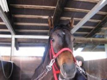 《経験者募集》「好きなことを仕事にしませんか?」馬が好き!なメンバーが馬のために働いている牧場です