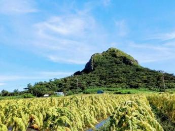☆未経験OK/女性活躍中!☆沖縄の自然豊かな島でリゾートバイト!全国から集った仲間と島暮らしの楽しさを堪能しましょう♪【男女別寮あり】
