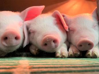 ♪未経験の方も大歓迎♪北の大地のアットホームな農場で日本一の豚をつくろう!【社会保険完備】