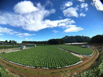 「農業にチャレンジしてみたい」その想いを応援します! 長野県川上村で11月末まで農業に没頭してみませんか? ◎個室部屋あり ◎車貸し出しOK ◎期間満了手当あり