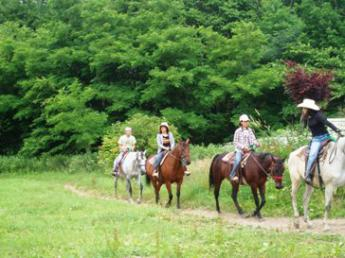 富良野の観光乗馬牧場で働きませんか?☆馬好き、接客好きの方大歓迎です☆