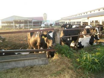 ☆急募☆ムリなく自然体で仕事をしてほしい!大自然の中で牛と一緒に成長しましょう!経験者の方優遇いたします!