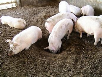 \定着率・休日取得率 業界トップクラス/「養豚がおもしろい」と感じることができる農場です☆未経験の方大歓迎!週休2日の農場で働きませんか?