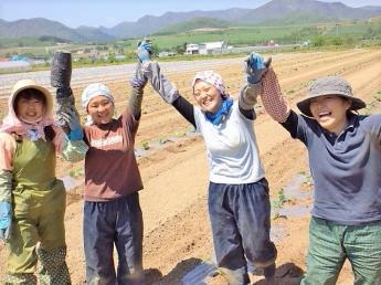 大自然の恵を浴びて美味しい野菜の選別作業!農業とは違い、天候に左右されない工場作業で楽しく働いてみませんか?