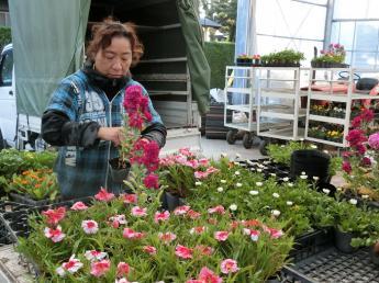 =未経験大歓迎=ニコニコ笑顔の園芸場で生活を彩るガーデニング用の花を作りませんか?