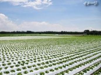 ◎追加募集◎太陽と青空と緑の大きな畑!大自然の中で気持ち良く農業してみませんか?今シーズンは1名募集★