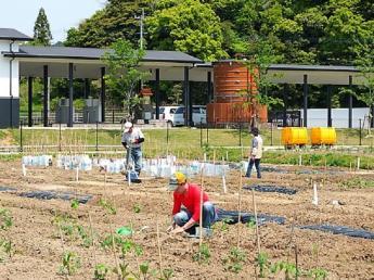 【日帰り農業体験プラン】 博多近郊の体験農園で野菜の栽培しとらんか?★約30種類の野菜の栽培★