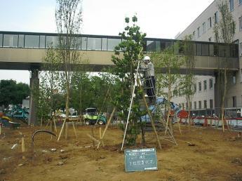 """樹木の生産から植栽工事、メンテナンスまで。幅広く""""緑""""に関わることのできる仕事です。 ヤル気と元気のある方お待ちしています!"""