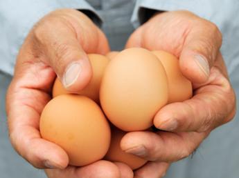 ★未経験歓迎★1日が「美味しい」の笑顔から始まる!その笑顔を支えるお仕事です。宇都宮でブランド卵をつくっています。