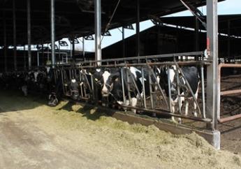 【月給24万円~・月8日休】「牛に話しかけ、牛に聞いて、牛に従う 」牛を第一に考える飯田牧場で働きませんか? ★エサ担当募集(機械作業メイン)★