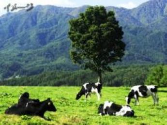 酪農家さんに「ありがとう!」と感謝される仕事です☆大自然が広がる十勝で酪農ヘルパーを始めてみませんか♪ 面接時交通費助成あり!