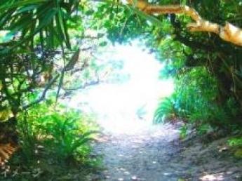 《友達同士OK》宮古島の自然豊かな環境の中、短期で農業にチャレンジしてみませんか?【寮あり】