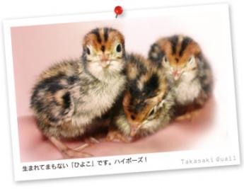 うずらの卵の生産日本一を目指して!私たちと一緒にうずらを育てませんか?★社会保険完備★