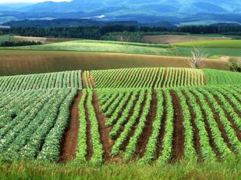 ★農業大国北海道で農業をやりませんか? 夏と冬のメリハリが魅力です☆未経験の方歓迎☆一緒に会社を作っていきましょう!