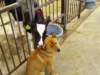 「チームワークを大切に」を常に心がけています。 7戸の酪農家が集まって設立された牧場で一緒に酪農をやりませんか?\数日間の体験研修もOK/