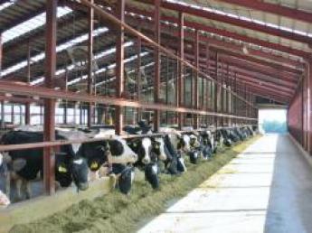 十勝のアットホームな牧場で酪農を始めてみませんか? 初めての人材募集!未経験の方でも仕事しやすい環境です!