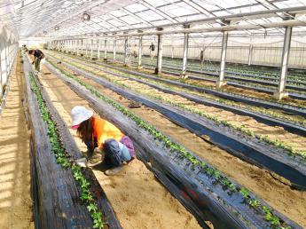 〚年間休日約104日〛◎規模拡大のため正社員2名募集◎新鮮な野菜を新鮮なうちに!福岡の農業法人で安定して働きませんか?〚順調にランクアップしていける好環境です〛