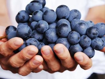 大手ワインメーカーのブドウ農園で、あなたの個性を表現してみませんか?★ワイン用ブドウ栽培経験者募集★【年間休日123日】