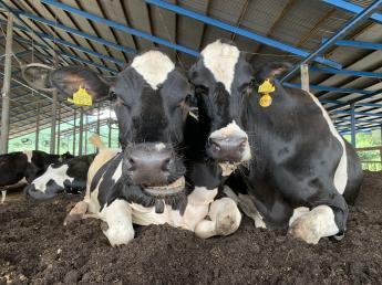 搾乳・牛乳製造・加工・販売全てに関われる牧場で働きませんか