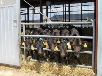 牛を毎日よく観察してあげてください! 動物が好きな方にピッタリの仕事です!《未経験歓迎・月給21万~・入社祝い金あり》