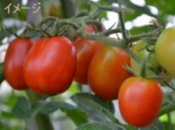 農業の新しいカタチ 大手生産法人で野菜の栽培を体験しませんか?