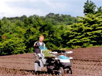 【寮費無料♪ 3食・食事付き】浅間山の麓、群馬県嬬恋村で高原野菜の収穫のお手伝いです♪