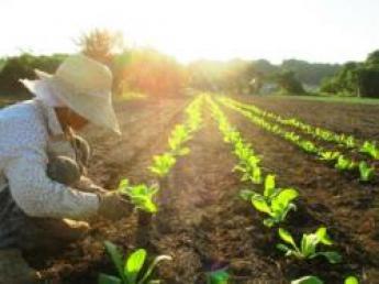 《寮あり》有機農業の有形無形の価値を求めて・・・ 今日も畑を耕します!私たちと共に未来に繋がる農業をしませんか?【短期バイト3名募集】