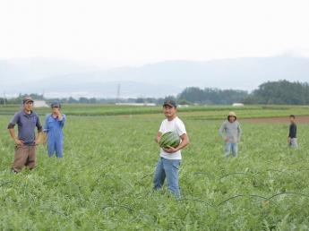 【個室寮あり/若手が活躍しています/友達同士&カップル&夫婦も歓迎】長野県松本市近く♪山形村にて、期間限定農業アルバイトをしませんか?