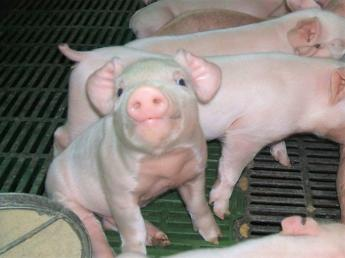 ◎未経験歓迎◎ブランド豚を一緒に育てましょう!和気あいあいな雰囲気の農場です♪【若手活躍中】動物好きな方大歓迎★
