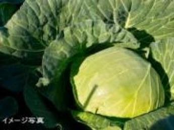 結城市野菜農園