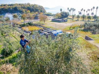 【限定9名募集!】瀬戸内海に浮かぶ美しい小豆島で、オリーヴ収穫スタッフ大募集!12月21日迄の短期間のお仕事です。小豆島の「オリーヴの森」で働いてみませんか?