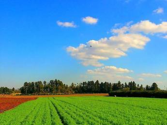今注目のニンジン専業農家で、美味しいニンジンを栽培してみませんか?  ◎10月~6月末までの期間限定(期間は相談可) ◎寮あり