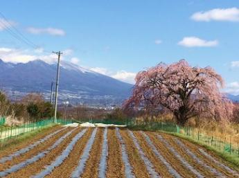 移住ランキング上位の長野!高原の美味しい野菜と自然と触れ合う充実した生活をしませんか?【年間休日120日以上】