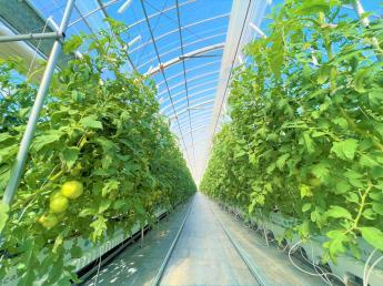 農業をもっと強く!楽しく!美味しく!をスローガンに共に成長出来る方を募集中! ☆最新の統合環境制御ハウス導入☆