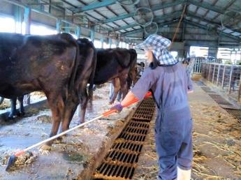 牛が好き! そんな方にぴったりです。黒毛和牛の世話をしませんか? ★未経験歓迎!★週3日勤務~OK★都市近郊の牧場です