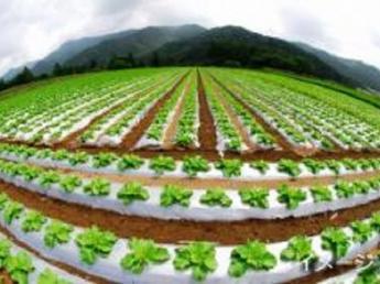 農業に興味ある人、お金を貯めて夢を叶えたい人、みんな集まれ!【寮あり&3食付】