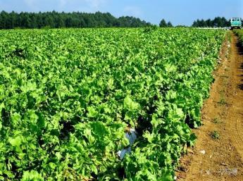 穏やかな空気感が好きな方にぴったりな農園です 【個室寮無料・免許なしOK】