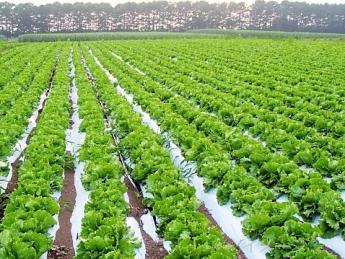 自由度が高いのはグリーンホクトですよ♪高原野菜のアルバイトをやるならグリーンホクトで決まり!!≪寮&3食付き無料!≫