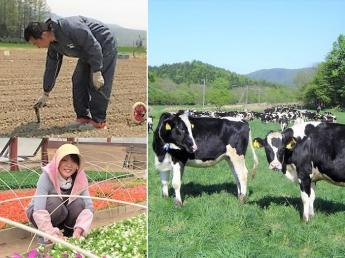 \1ヶ月~OK/美深町で気軽に農業に挑戦してみませんか?短期間で酪農体験!《オール電化宿舎完備・寮費無料》