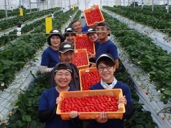 舞浜のテーマパーク向けのイチゴ農園を北海道に開設!あなたの手で、北海道から魔法を届けませんか?【栽培管理者募集】